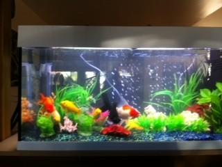 aquarium dubai 100 190l aquarien von 101 bis 400 liter. Black Bedroom Furniture Sets. Home Design Ideas