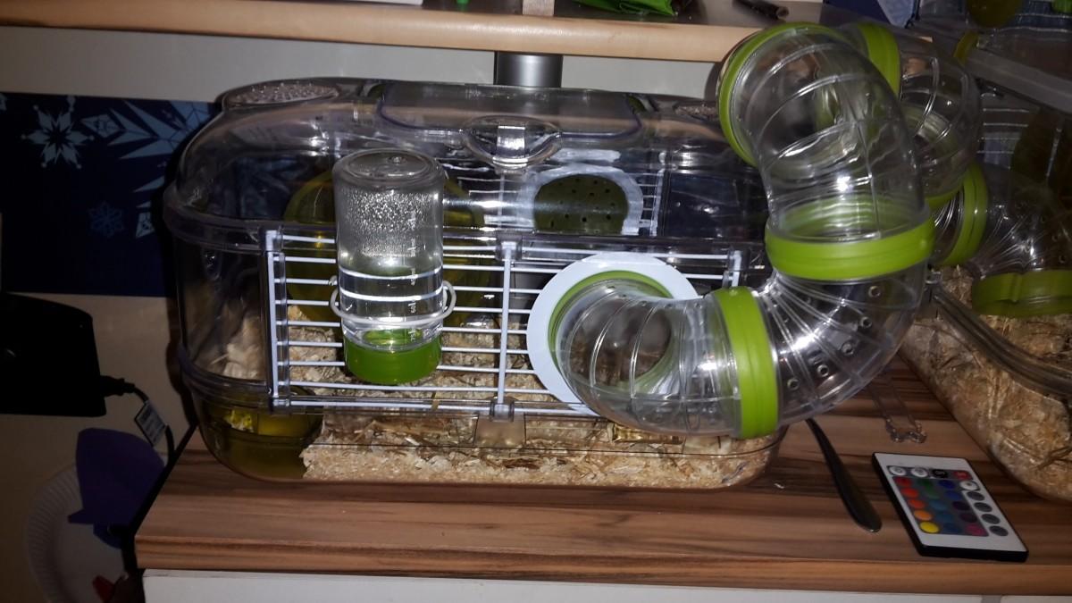 k fig rodylounge mini in kiwi hamsterk fige. Black Bedroom Furniture Sets. Home Design Ideas