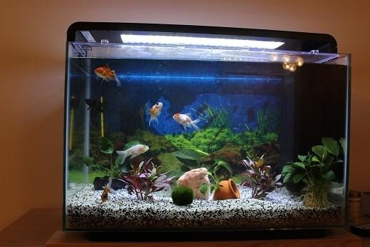 aquarium home 60 in wei und schwarz design aquarien und. Black Bedroom Furniture Sets. Home Design Ideas