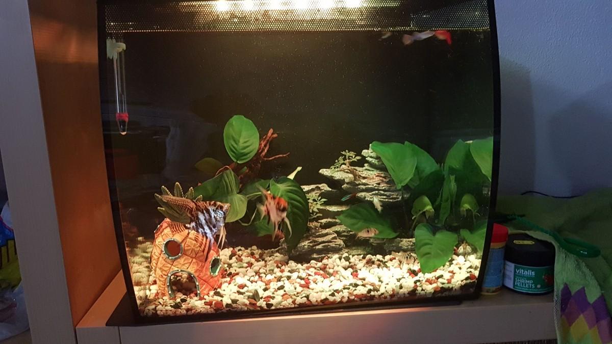 aquarium flex fluval aquarien m bel. Black Bedroom Furniture Sets. Home Design Ideas